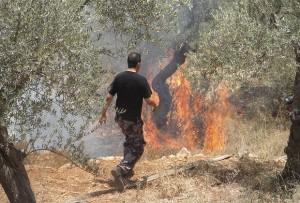 burning-olive